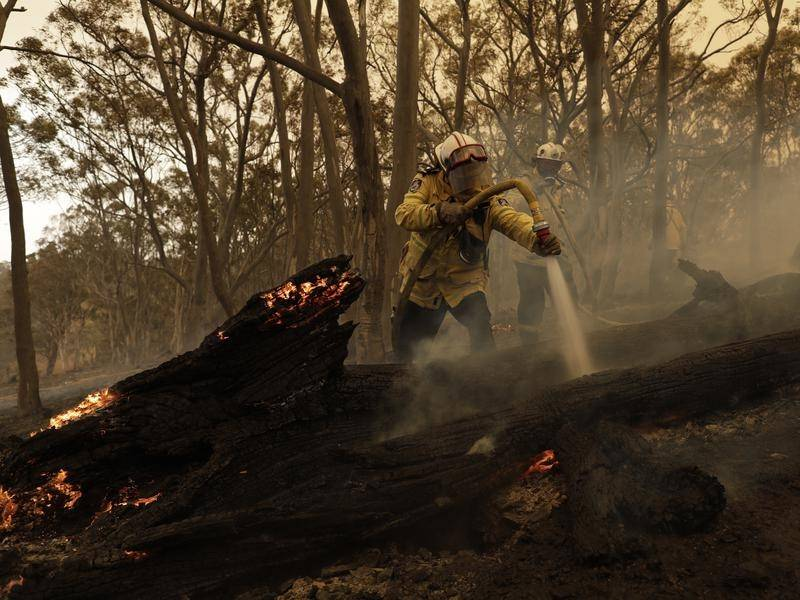 The COVID-19 pandemic has made recovery from the bushfires more challenging, an inquiry has heard.